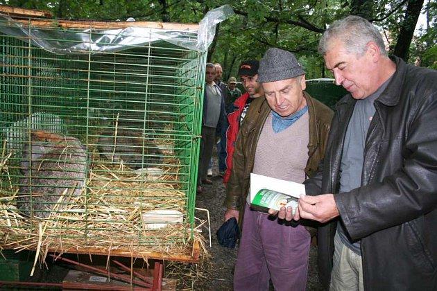 Výstava mladých králíků