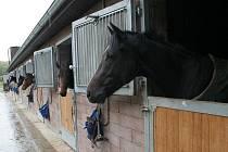 V areálu U Tří Grácií vyrůstají ve stáji Luďka Mikuleckého špičkoví dostihoví koně.