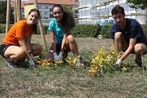 Dobrovolníci z celého světa se podílí na údržbě a ochraně krajiny v Chráněné krajinné oblasti Pálava.