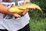 V Popicích se s prázdninami rozloučili chytáním ryb