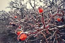 Zimní kása a nálada při procházce v Přítlukách.