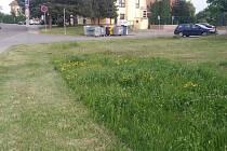Květnatá louka v Mikulově.