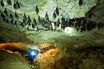 Odborníci napočítali v jeskyni Na Turoldu šest set vrápenců malých.