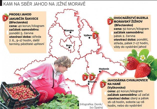 Samosběr jahod na jižní Moravě.