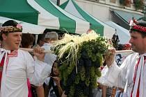 Největší trs hroznů byl v Mikulově k vidění při průchodu historického průvodu.