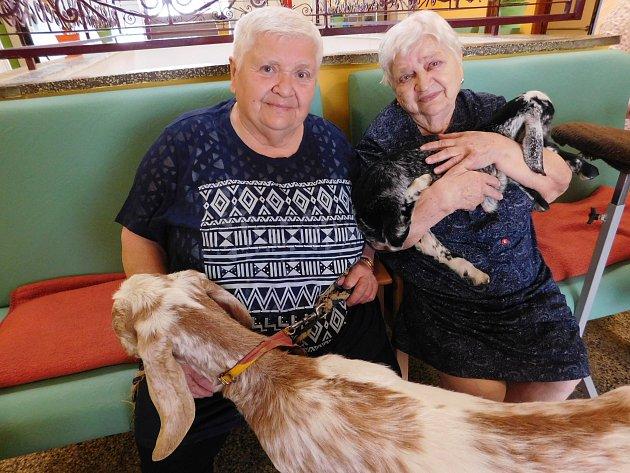 Penzistům vbřeclavském domově důchodců zpříjemňuje dny kontakt se zvířaty.