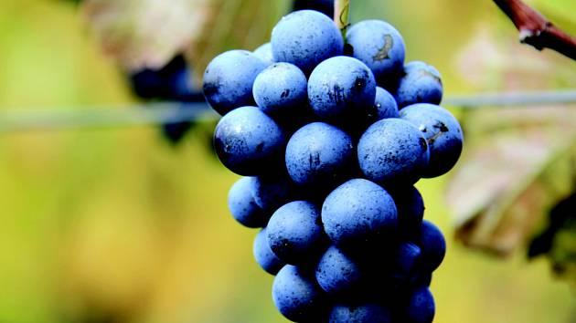 Zapojte se do soutěže o 3 kartony lahodného vína.
