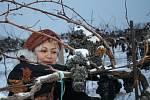Již od časného rána se sbíraly zmrzlé hrozny André nedaleko Hustopečí.