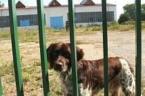 Areál firmy Dion CZ zeje prázdnotou. Za branou jen pobíhá hlídačův pes.