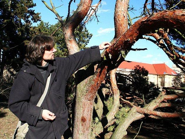 Těžký sníh, který se týdny držel na jihu Moravy, vážně poškodil desítky vzácných stromů u lednického zámku.