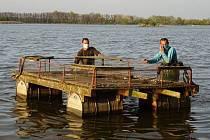 Po jarní údržbě vrátili ornitologové na hladinu Mlýnského a Prostředního rybníka u Lednice plovoucí ostrovy pro rybáky obecné.