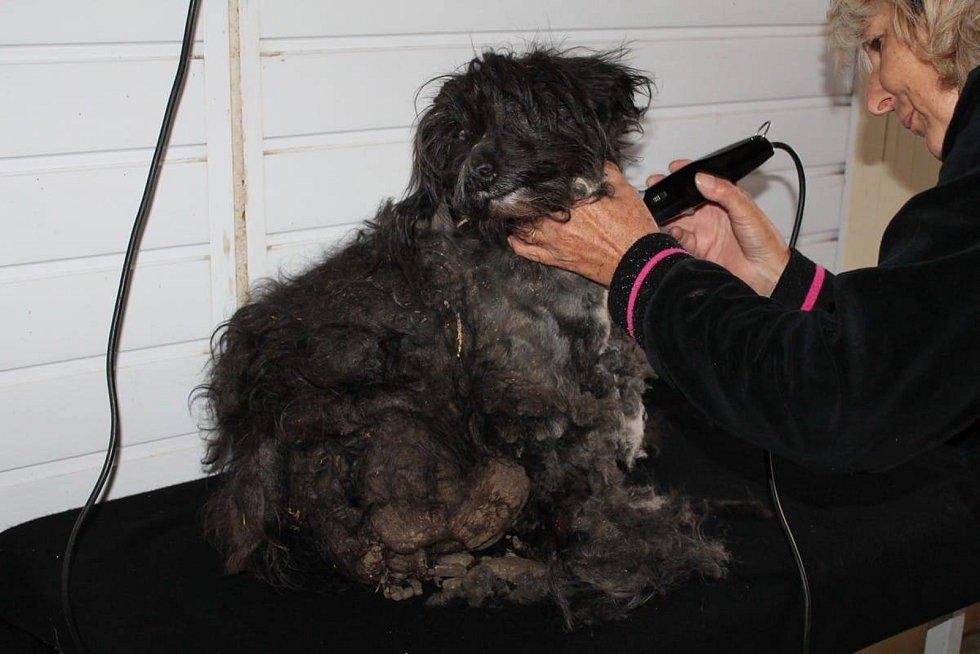 Případ psa Šok-Šona, neboli Šošona, o kterého pečují v břeclavském městském útulku pro psy v Bulharech.