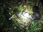 Štěňata zemřela v chladné řece, lidé viníka odsoudili