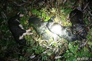 V Břeclavi někdo hodil do ledové Dyje tašku se čtyřmi štěňaty.