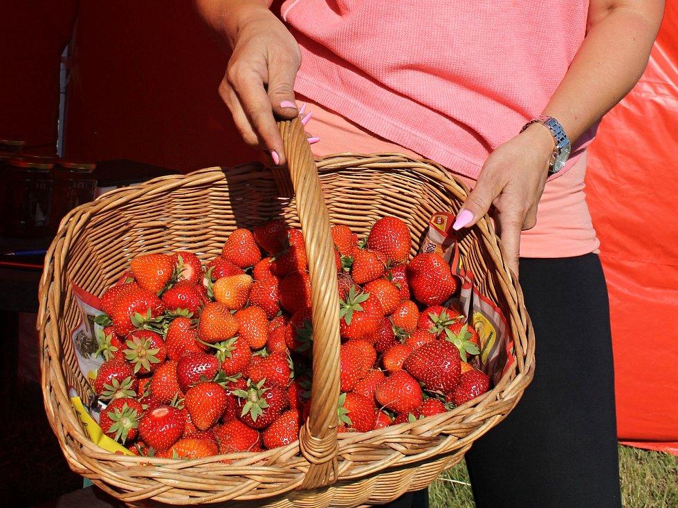 Samosběr jahod. Ilustrační foto.