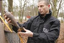 Policisté z pyrotechnické služby ve čtvrtek ukázali a popsali dosavadní nalezenou munici v Bořím lese mezi Valticemi a Břeclaví. Pyrotechnici pak předvedli, jak střelivo hledají.