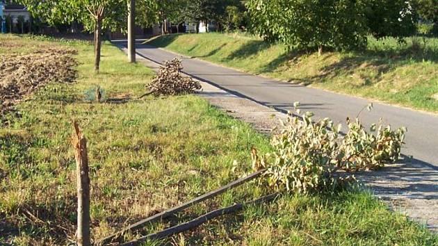 Neznámý darebák již po několikáté napadl alej stromů mezi obcí a sklepy pod Kraví horou.