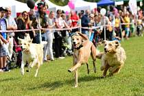 V Lanžhotě oslaví Moravský psí den.