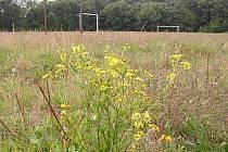 Fotbalové hřiště v Dobrém Poli je zároveň slaniskem a přírodní rezervací.