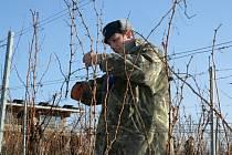 Ve vinicích popického Sonberku se uskutečnila soutěž v řezu révy vinné.