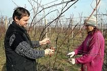 Osmapadesátiletý Jan Čech podniká ve vinařství od roku 1996. Nejdříve působil jako spolumajitel a sklepmistr ve vinařské firmě Čebav Tvrdonice, od letoška pak ve vlastním vinařství.