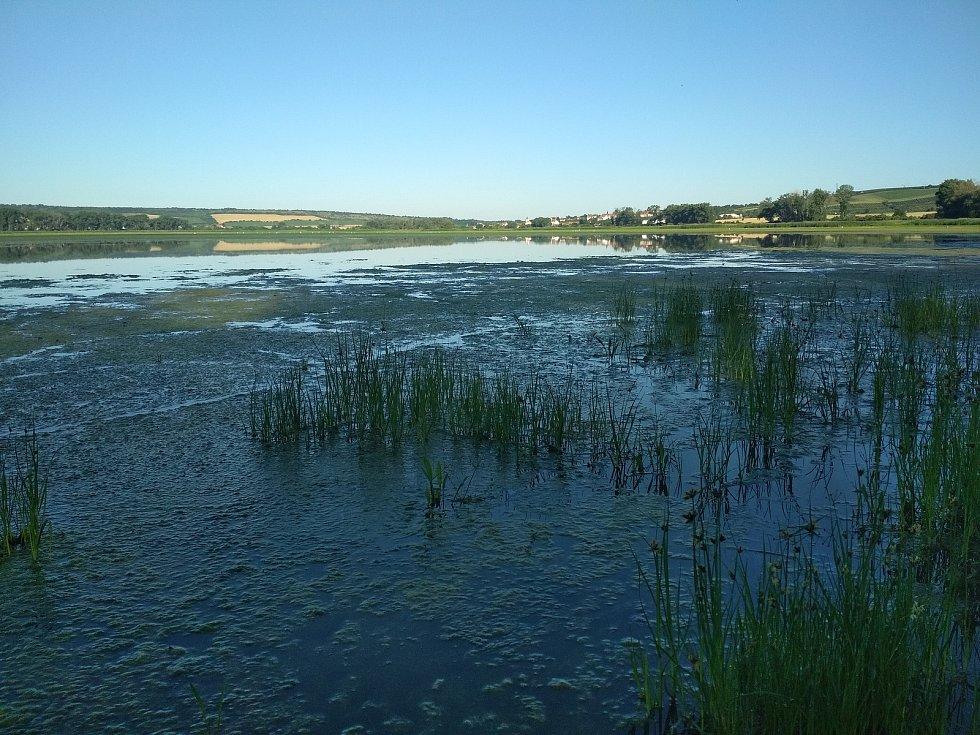 Na rybníce Nesyt.