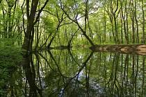 Vodohospodáři z Povodí Moravy začnou na žádost lesníků zaplavovat lužní les v oboře Sotok u Břeclavi. Nahradí jarní záplavy. Foto: Město Břeclav