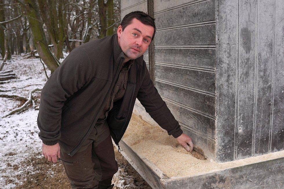 Krmelců mají v Oboře Obelisk desítky. Podle správce Petra Dvořáka přikrmování končí zpravidla kolem období Velikonoc..