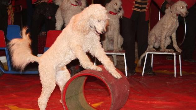 V areálu pod břeclavským zámkem rozložil šapitó světoznámý Cirkus Humberto.