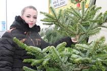 Před břeclavskými obchodními domy jsou již k prodeji vánoční stromky.