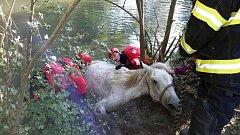 Hasiči v Lednici zachraňovali koně. Uvízl v blátě