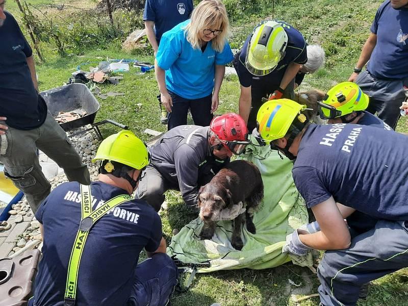 Pražští hasiči vyprostili z trosek domu zasypaného psa.
