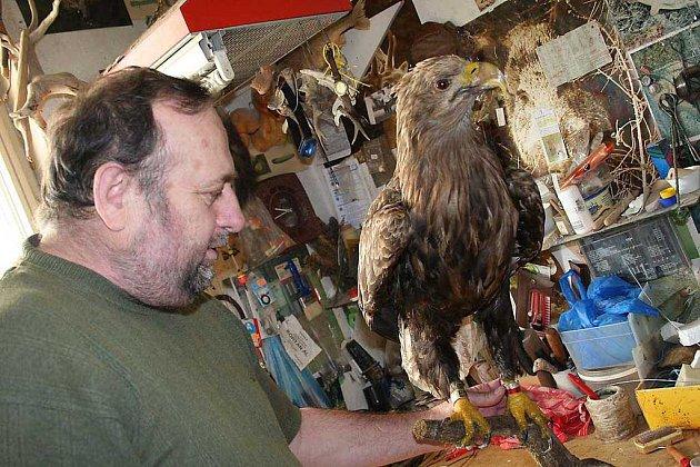 Práce na vzácném orlu mořském trvala preparátorovi Pavlu Zugarovi tři dny.