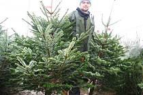 Lidé kupují vánoční stromky jak u prodejců, tak přímo od lesníků.