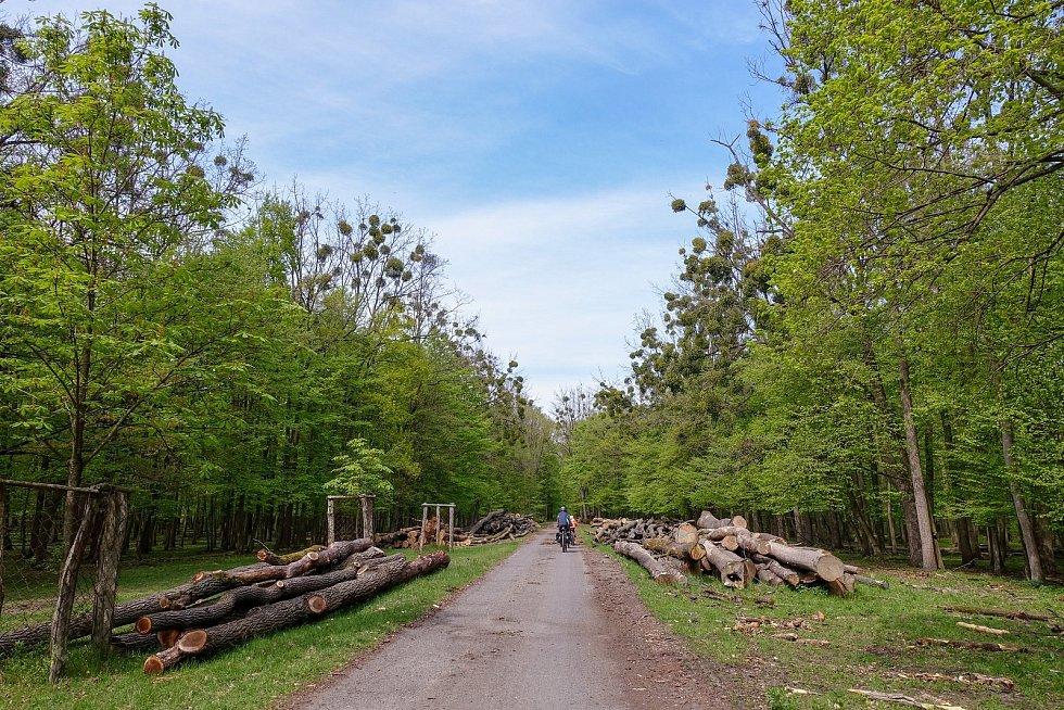 Z výletu k soutoku Dyje s Moravou. Jiklínská cesta. Od soutoku můžete jet buď po ní (motá se, ale je moc pěkná), nebo podél břehu Moravy.