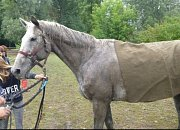 Hasiči pomáhali koni z řeky