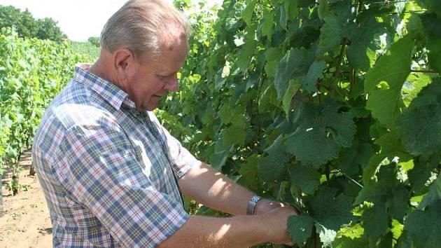 Hned ráno vyrazil František Filipovič z Hrušek zkontrolovat, co v jeho vinici natropilo pondělní krupobití.