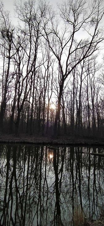 Naučnou stezku Lužní les projede na kole i pěšky.