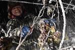 Pracovníci z vinařství Château Valtice sbírali v sobotu brzy ráno hrozny na výrobu ledového vína ve vinohradu v Dolních Dunajovicích.