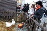Svatomartinský jarmark se uskutečnil o víkendu v Mikulově. Příchozí bavila vystoupení, kromě prodejních stánků byly na tamním Náměstí k vidění i živé husy.