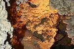 Více než rok museli milovníci jeskyní čekat na to, až se opět otevře Jezerní dóm jeskyně Na Turoldu. Na vině byla vysoká spodní voda.