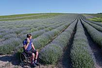 Levandulová pole ve Starovičkách na Břeclavsku po zpoždění rozkvétají. Jsou lákadlem turistů a nadšených fotografů. Farmář Stanislav Bíza, 18. června 2021.