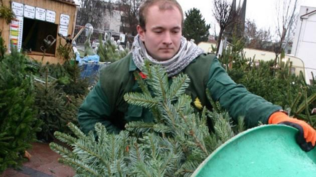 Pichlavé symboly Vánoc už plní prostranství před supermarkety. A nejen ta. V Břeclavi se nyní dají vánoční stromky koupit před Lidlem či Tescem. A brzy přibudou i další místa.