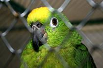 Výstava papoušků v podivínské Myslivně.