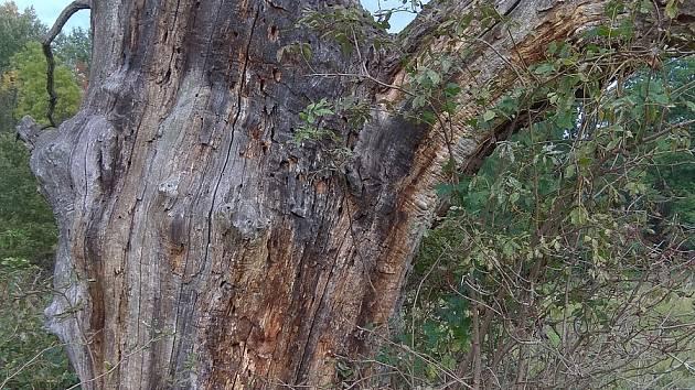 Vzrostlé stromy v lednickém zámeckém parku likviduje kůrovec.