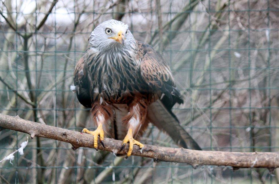 V Záchranné stanici pro dravé ptáky v Rajhradě se starají o zraněné živočichy.