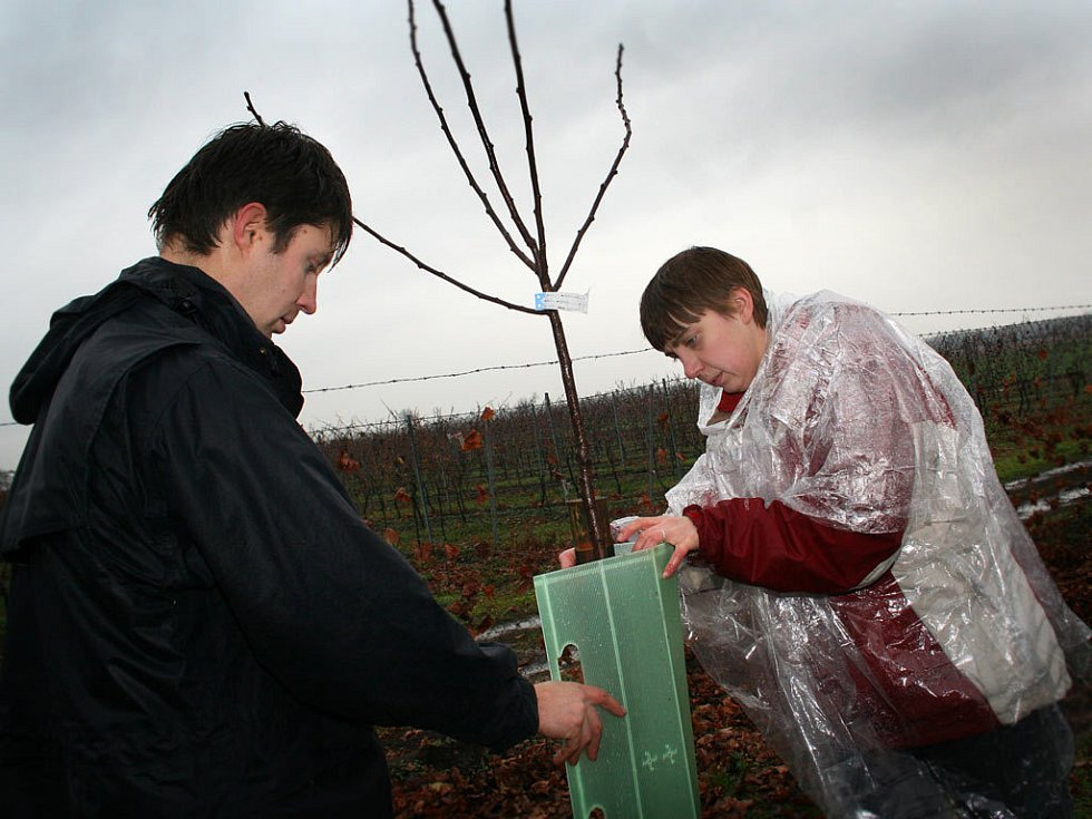 Cyklotrasu u Nového Přerova lemují adoptované stromy