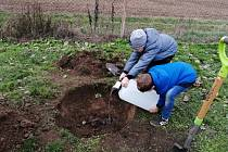 Na třicet stromů a keřů vysází v neděli dobrovolníci u poštorenského hřbitova.