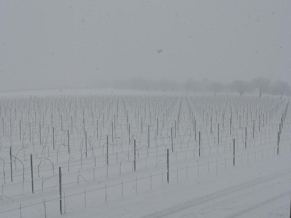 Zasněžení vinohrady ve Valticích na Břeclavsku