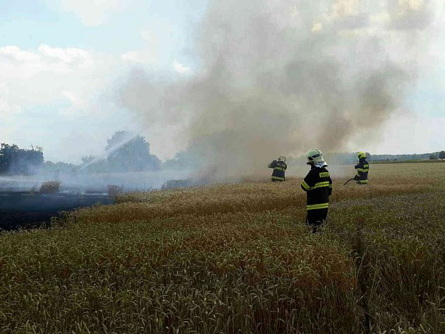 Při požáru u Lanžhota oheň poničil obilí.